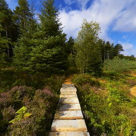 Dalby Forest - Dixons Hollow